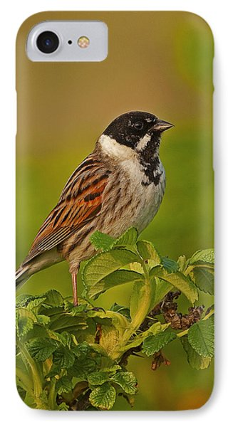 Reed Bunting IPhone Case