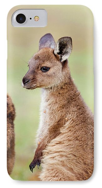 Western Grey Kangaroo (macropus IPhone Case