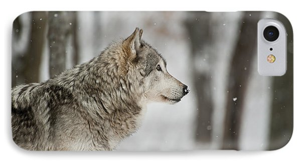 Timber Wolf Pictures IPhone Case