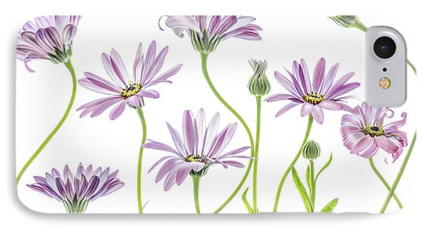 Daisy iPhone 8 Case - Cape Daisies by Mandy Disher