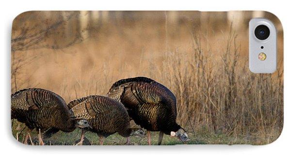 Eastern Wild Turkeys IPhone Case