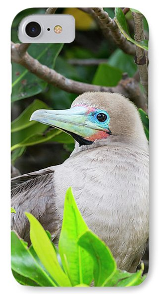 Ecuador, Galapagos Islands, Genovesa IPhone Case