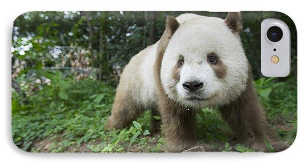 Giant Panda Brown Morph China IPhone Case
