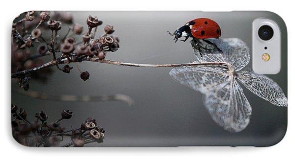 Ladybird On Hydrangea. IPhone Case