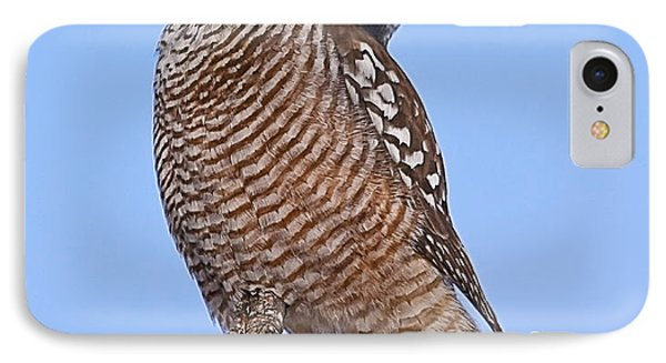 Northern Hawk Owl IPhone Case