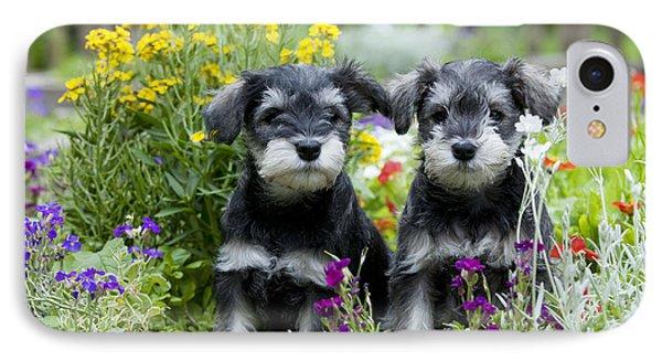 Schnauzer Puppy Dogs IPhone Case