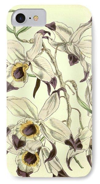19th Century Botanical Colour  Print. Botanical Illustration IPhone Case