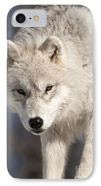 Arctic Wolf Pup IPhone Case