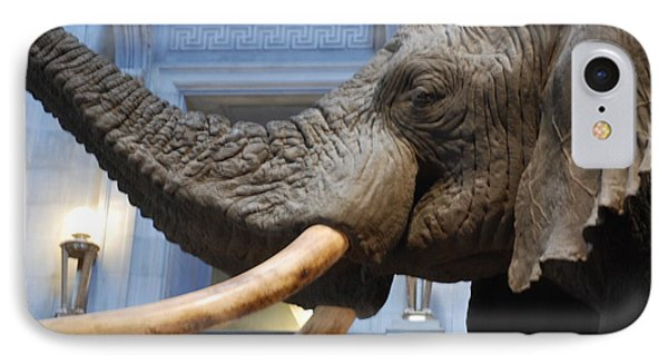 Bull Elephant In Natural History Rotunda IPhone Case