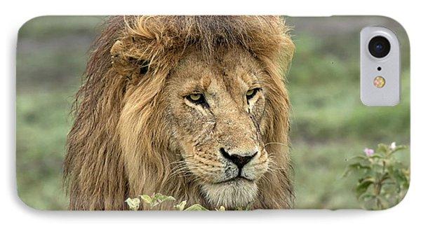 Africa, Tanzania, Serengeti IPhone Case