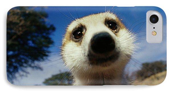 Republic Of South Africa iPhone 8 Case - A Close View Of A Meerkats Face by Mattias Klum