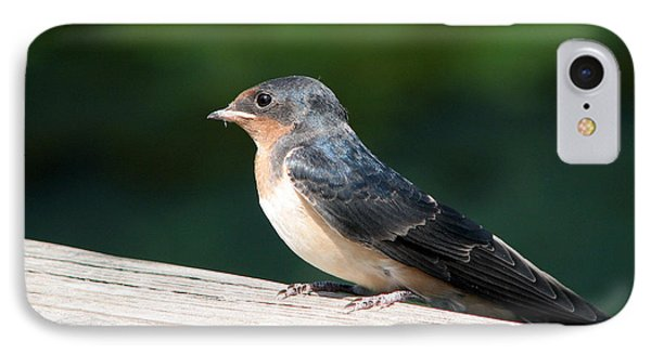 A Female Purple Martin Is Watching You IPhone Case