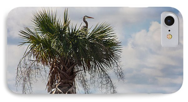 A Great Blue Heron Nests On A Cabbage Palmetto IPhone Case