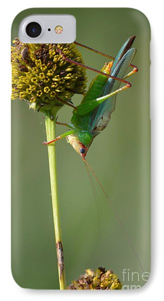 A Handsome Meadow Katydid IPhone Case