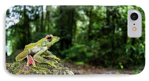 A Malayan Flying Frog IPhone Case
