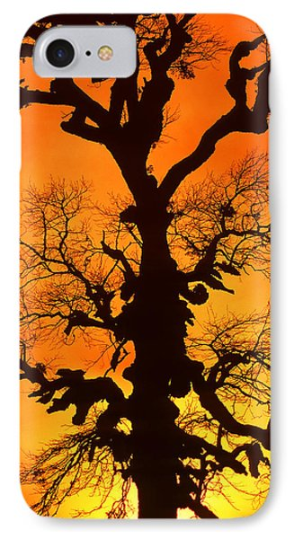 A Tree Is An Object Of Beauty Xii IPhone Case
