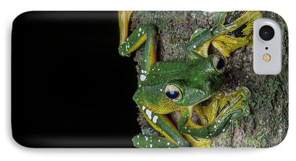 A Wallaces Flying Frog, Rhacaphorus IPhone Case