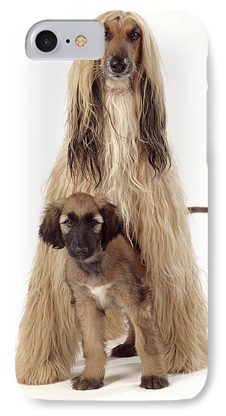 Afghan Hound And Puppy IPhone Case