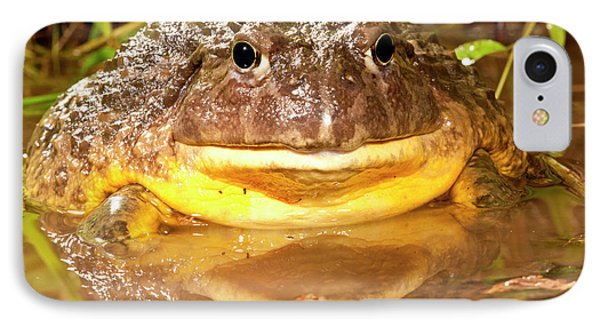 African Burrowing Bullfrog IPhone Case