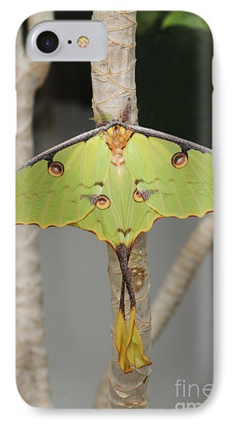 African Moon Moth IPhone Case