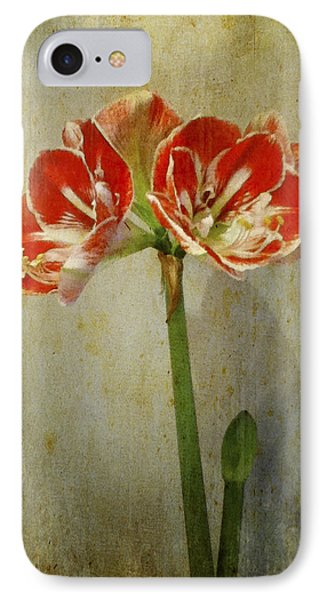 Amaryllis IPhone Case