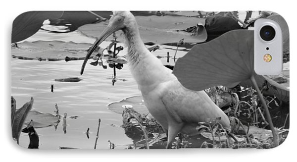American White Ibis Black And White IPhone Case
