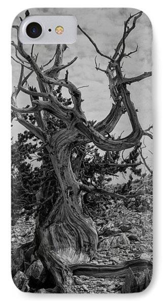 Ancient Bristlecone Pine IPhone Case