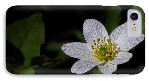 Anemone Nemorosa  By Leif Sohlman IPhone Case