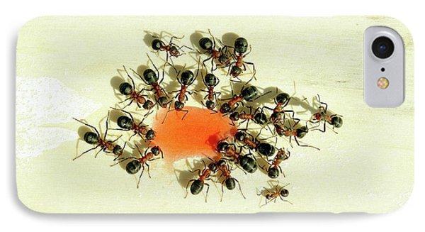 Ants Feeding IPhone Case