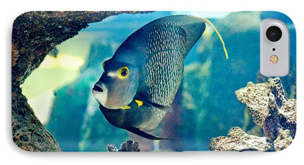 French Angelfish IPhone Case