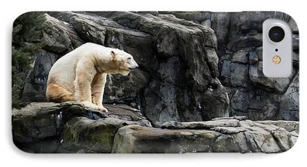 Arctic Bear IPhone Case
