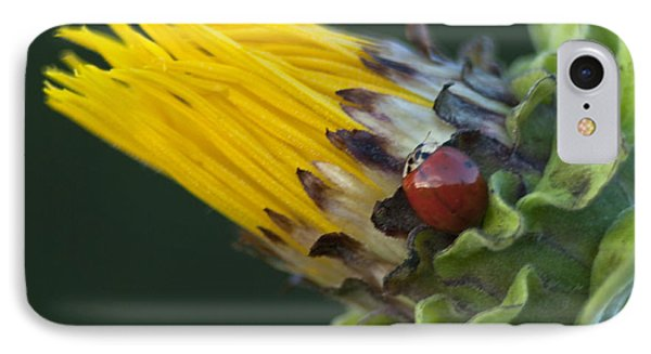Asian Ladybug On Mock Sunflower IPhone Case