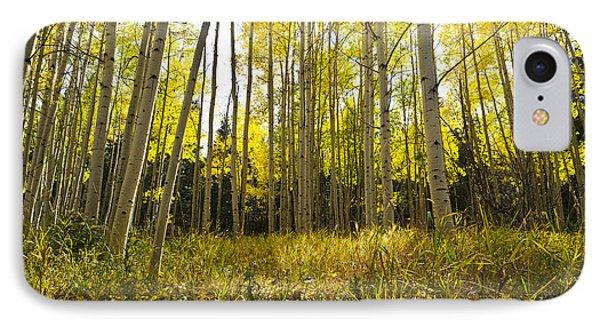 Aspen Trees Colorado IPhone Case