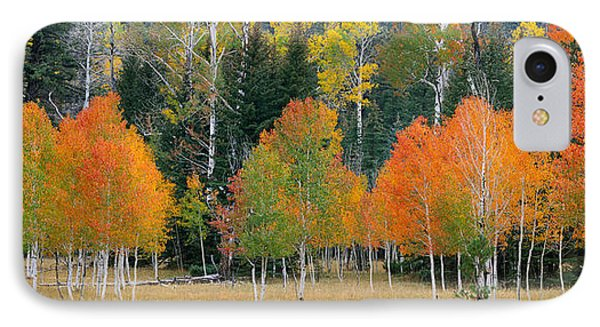 Aspens And Meadow-pan IPhone Case
