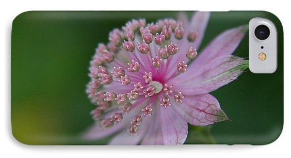Astrantia Up Close IPhone Case