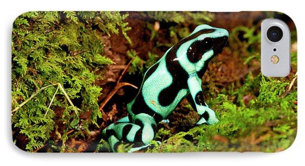 Auratus Dart Frog Dendrobates Auratus IPhone Case