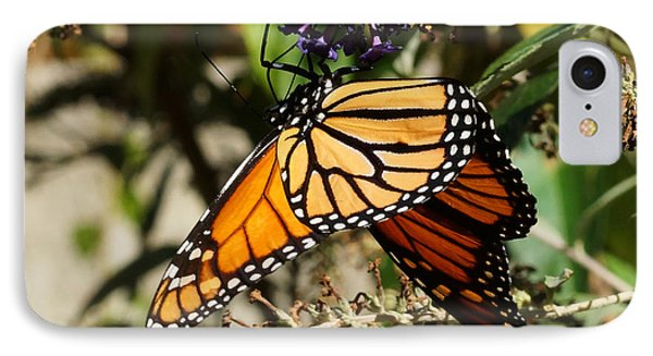 Autumn Butterfly IPhone Case