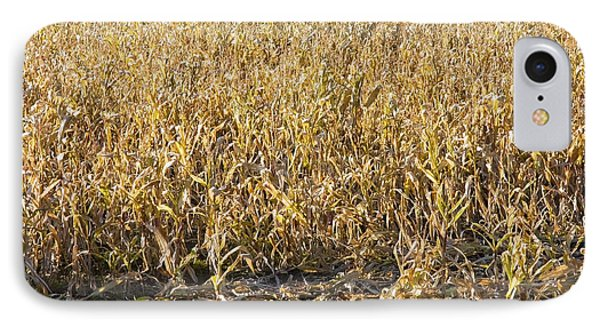 Autumn Cattle Silage Corn In Maine IPhone Case