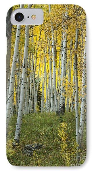 Autumn In The Aspen Grove IPhone Case