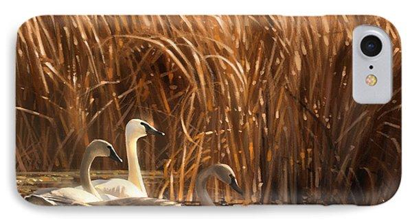 Autumn Light- Trumpeter Swans IPhone Case