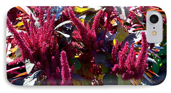 Autumn Magenta Jewel Alstede Farm IPhone Case