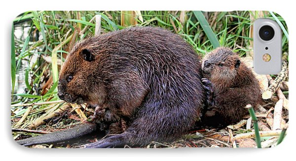 Baby Beaver With Mother IPhone Case