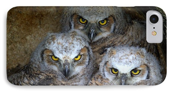 Baby Big Horned Owls IPhone Case