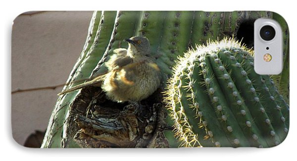 Baby Chick In Sahuaro Cactus IPhone Case
