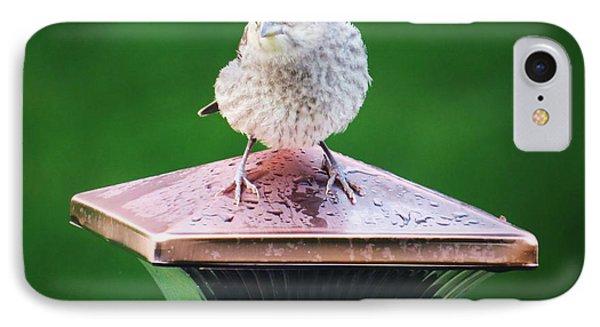 Baby Cowbird IPhone Case