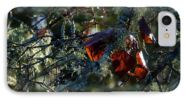 Back Lit Autumn Leaves IPhone Case