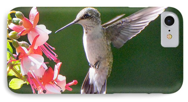 Backlit Fuchsia And Hummer IPhone Case