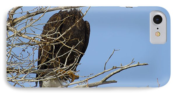 Bald Eagle And Branches 2 IPhone Case