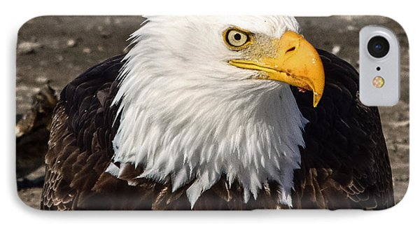 Bald Eagle Looking At You IPhone Case