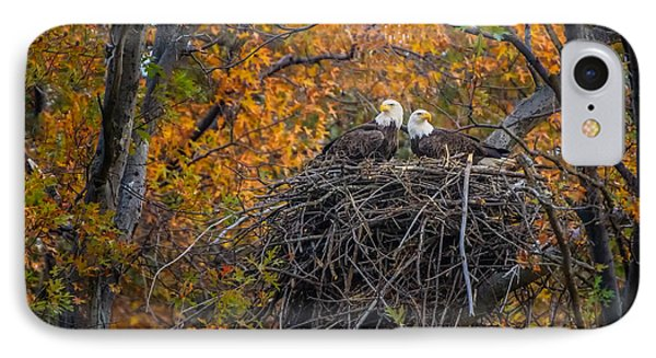 Bald Eagles Nest In Fall IPhone Case